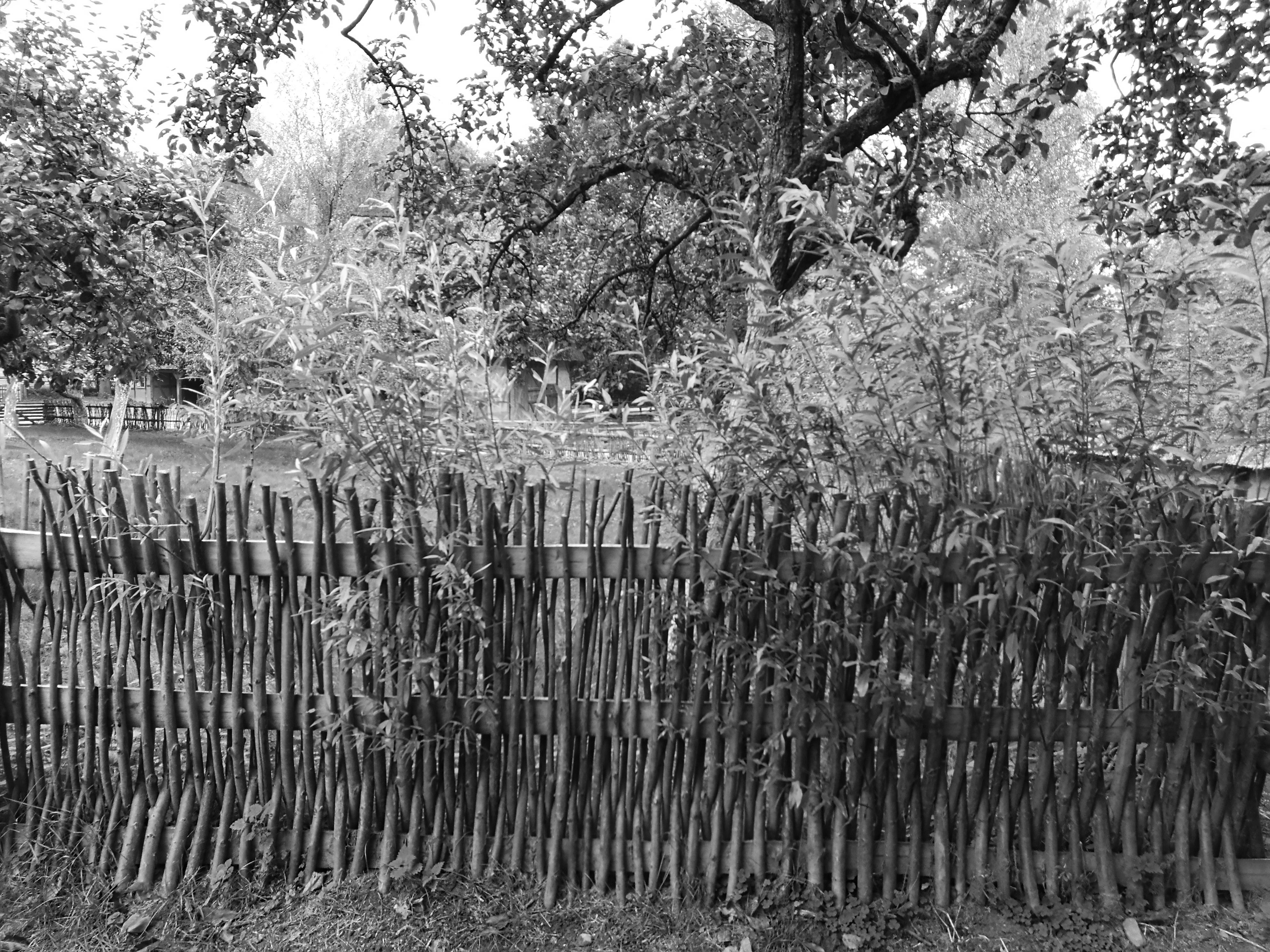 Die Weide ein Heuerlingsbaum – Heuerleute